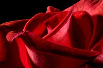 leyenda de la rosa de la pasion